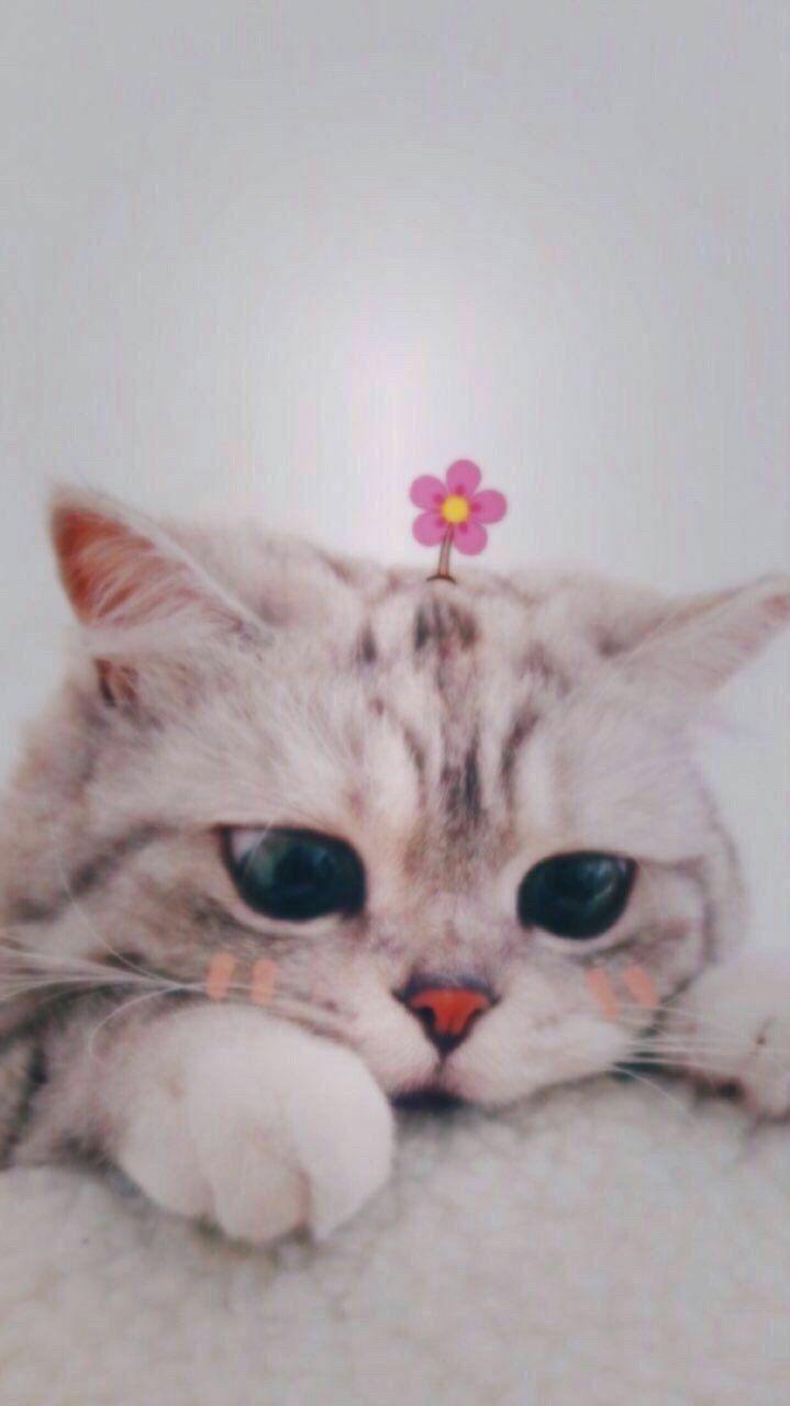 Cat Aesthetic Orange Cat Aesthetic Gambar Hewan Kucing Cantik Wallpaper Kucing