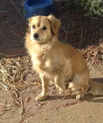 Founddog 2 28 14 Bicknell In Male Ron Powers Lost And Found Pets