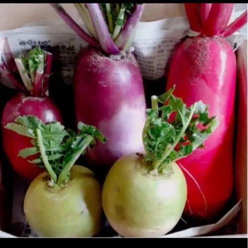 彩野菜セット野菜詰め合わせ