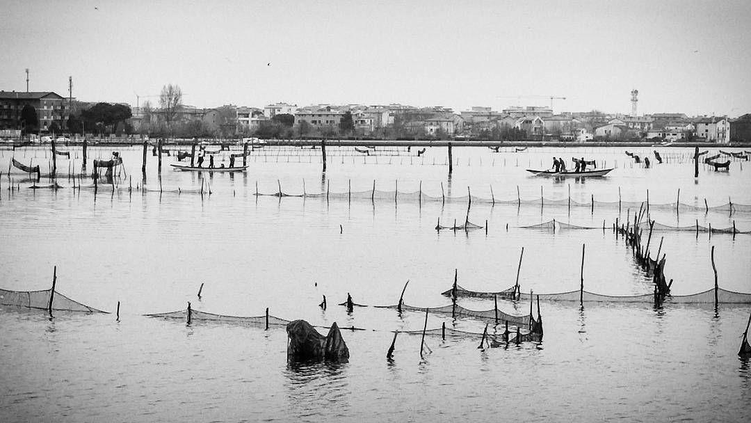 Lusenzo in voga #igers #igerschioggia. #igersvenezia #instachioggia #igerveneto. #instavenezia #chioggia #lusenzo #biancoenero #voga #pesce #cogoli #sottomarina #fotografiitaliani #visitveneto #al3storie #loffredafishdesign. #pescherialoffreda by pescheria_loffreda