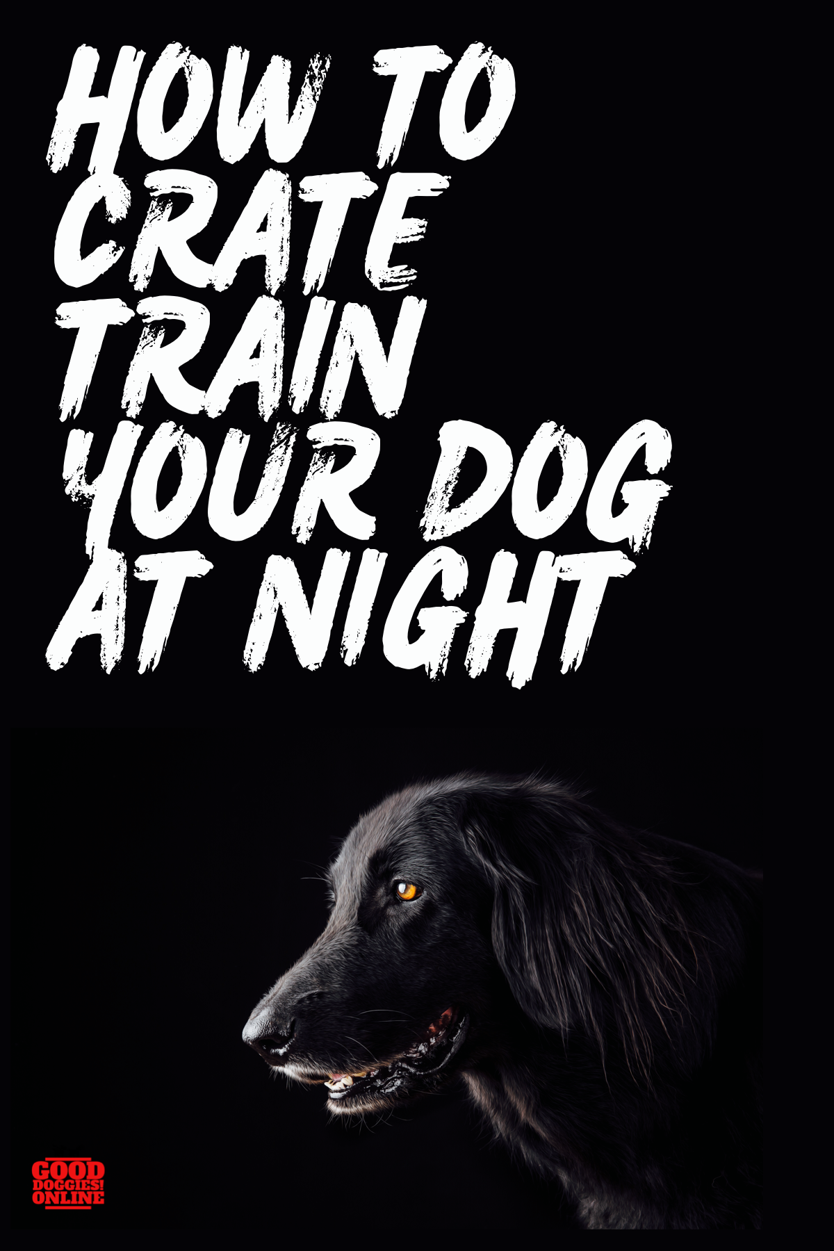How to Crate Train a Dog at Night Big dog little dog