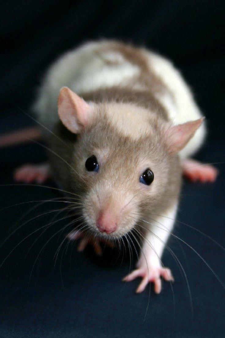 How do you know if you have rodents in your house click