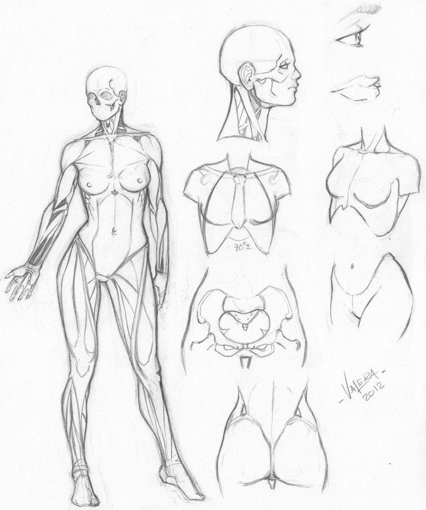 Pin De Conchitaaaa En Sketches Dibujo Anatomia Humana Arte De Anatomia Humana Arte De Anatomia
