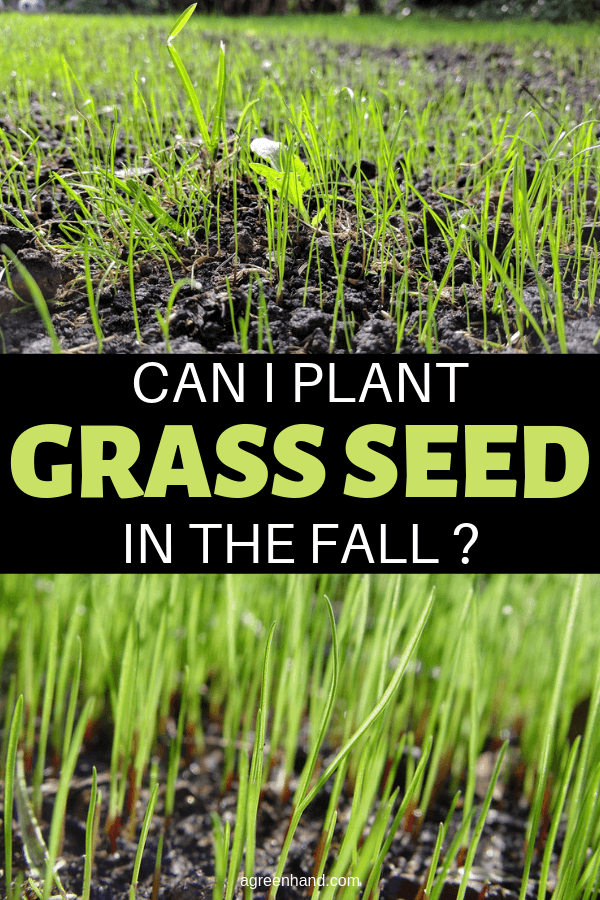 When Planting Grass Seed In The Fall Time The Seeding To Permit The Grass Seed To Completely Develop Before Fros Planting Grass Seed Planting Grass Grass Seed