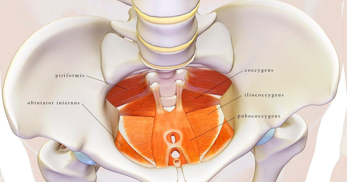 Dear Friends, In this blog post I go over the muscles of the pelvic ...