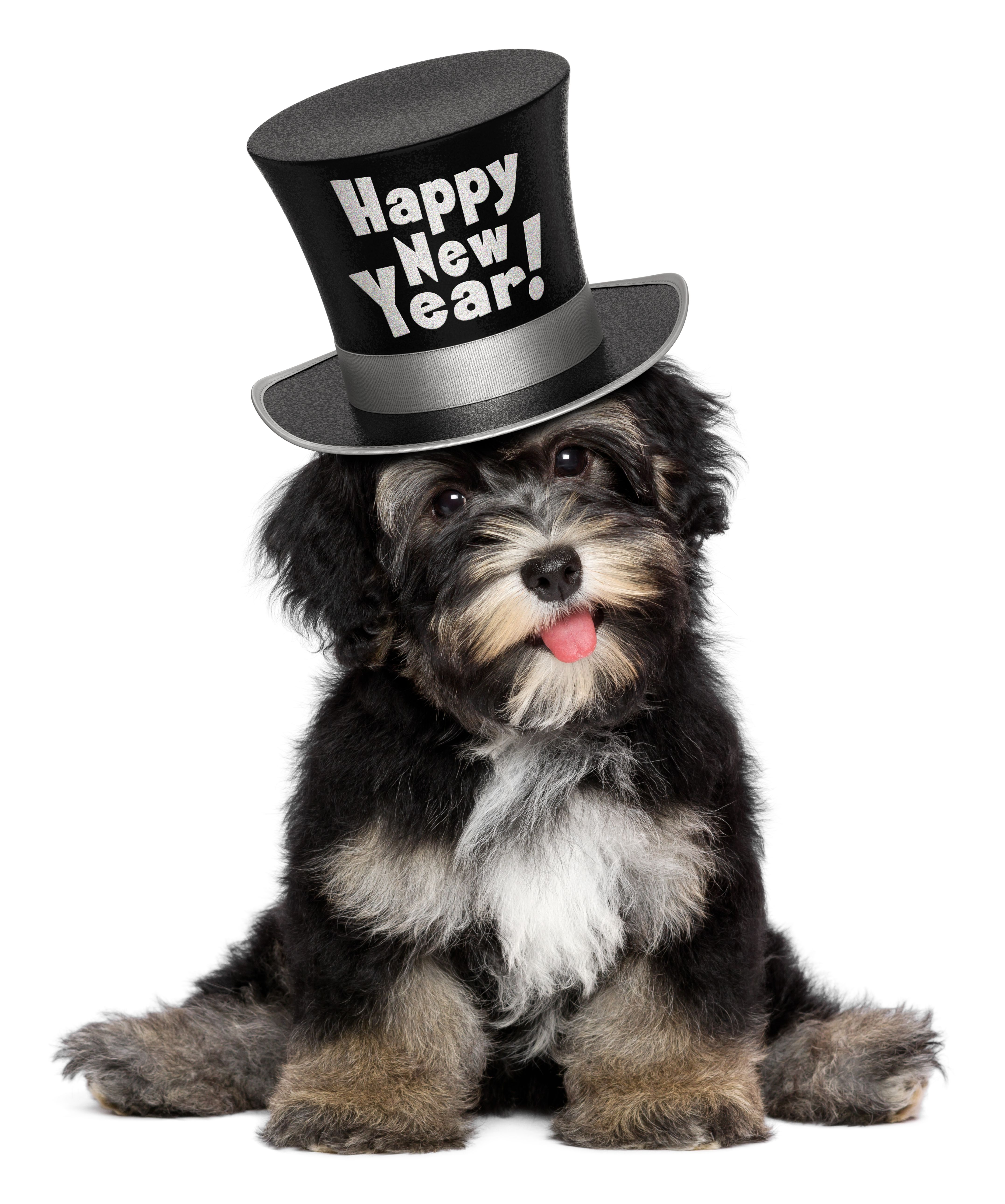 We Wish You And Your Family A Happy New Year And we thank