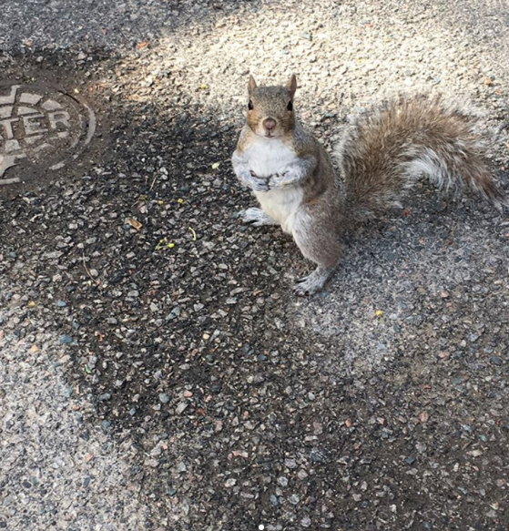 This little guy stopped to say hello this morning: http://ift.tt/2pVuw0L
