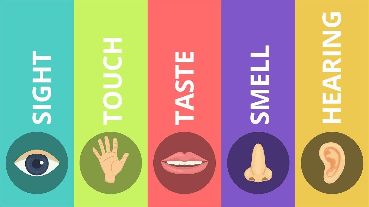 Resultado de imagen de MY FIVE SENSES FOR KIDS | My five senses ...