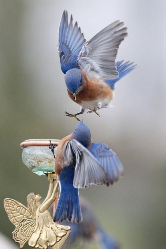 New Wonderful Photos: Bluebirds, Cutest Paw