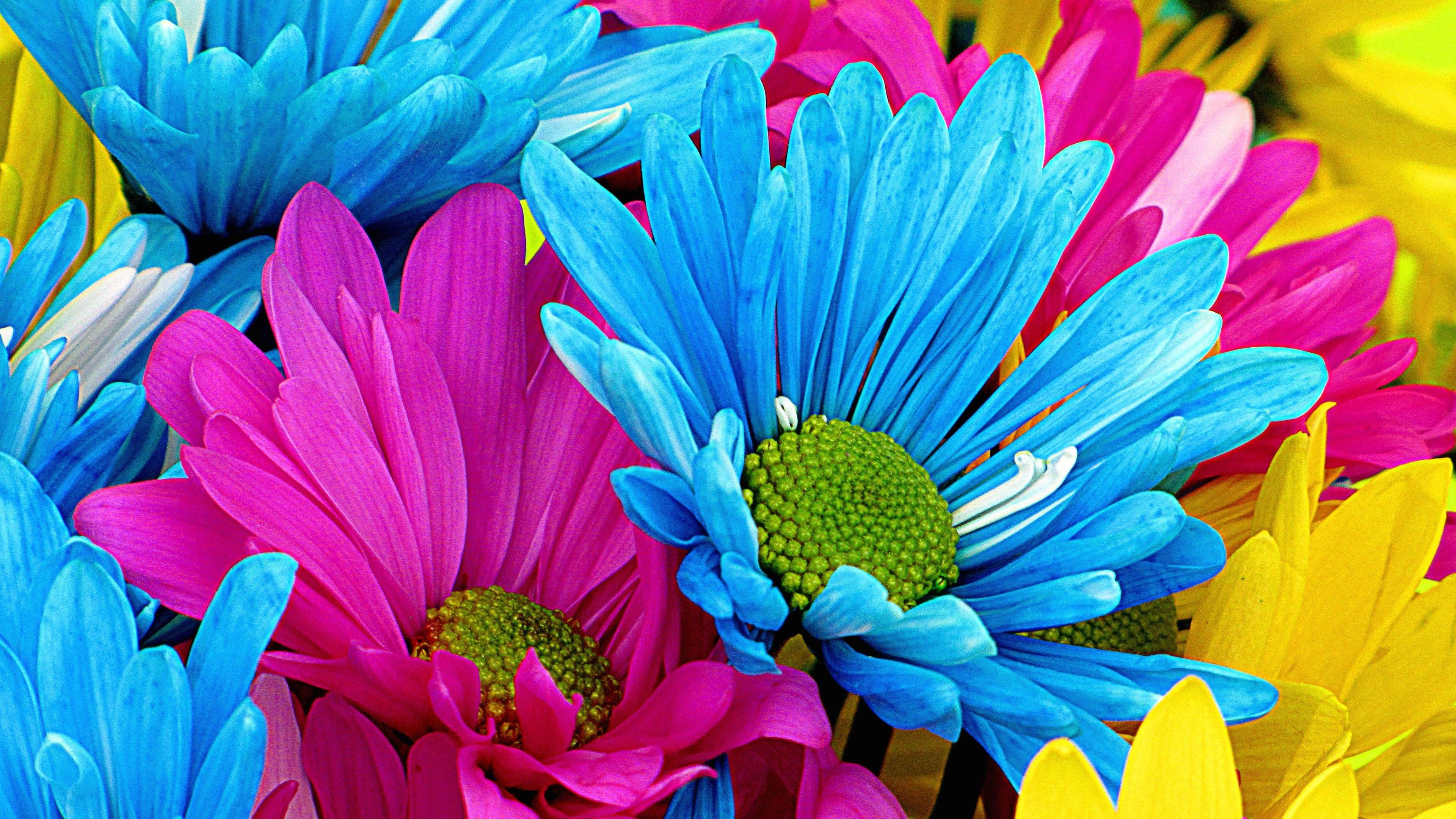 Colorful Flower Graphics Daisy Wallpaper High Definition 16584