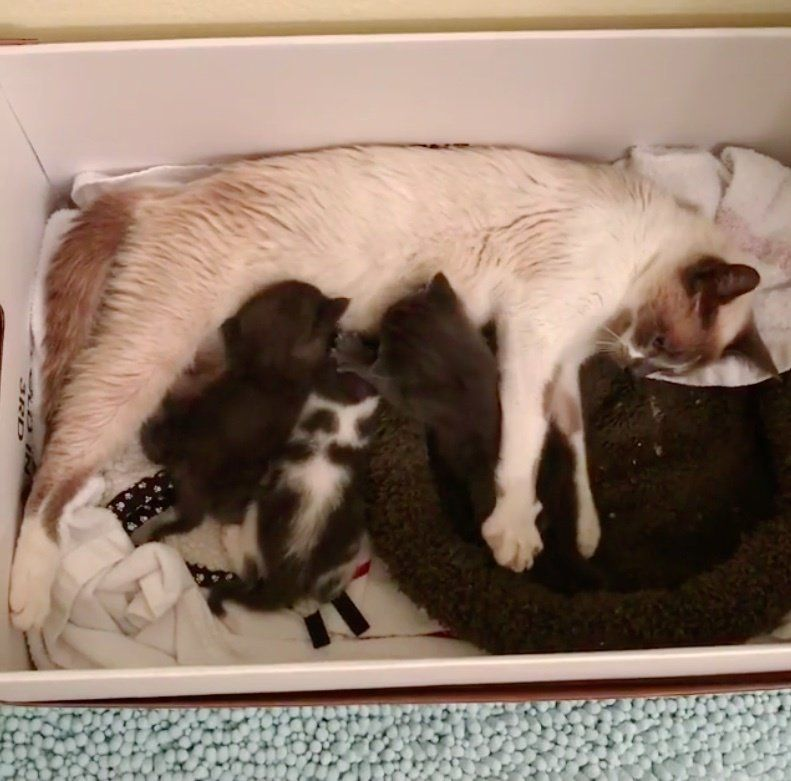 Cat Mom Refuses To Leave Her Kittens After Being Saved From Shelter Cat Mom Kittens Mama Cat
