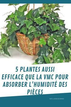 5 Plantes Qui Absorbent L Humidite De Toutes Les Pieces Decoration Plantes Interieur Plante Deco Plantes