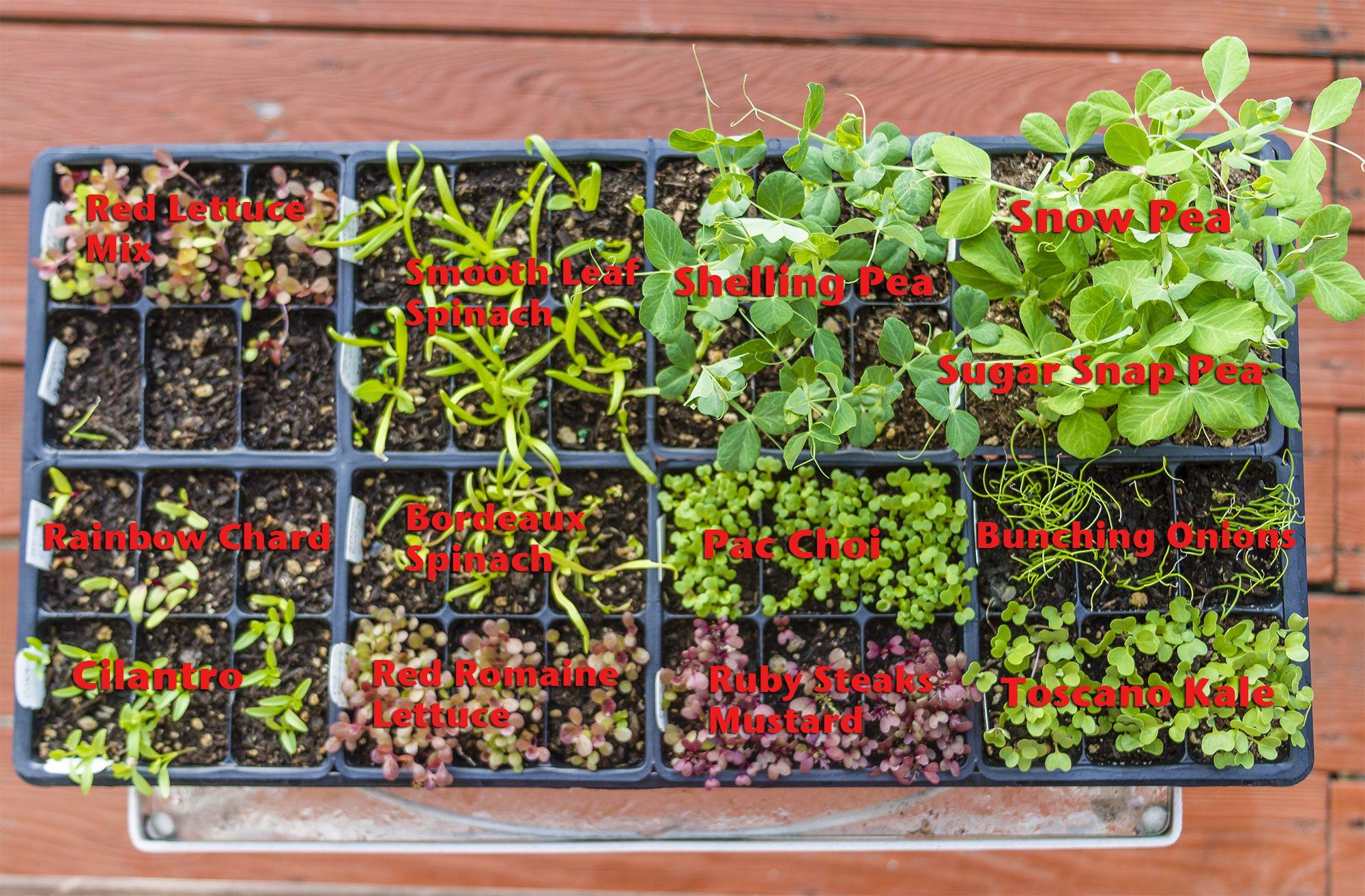 Genial Tips On Starting Your Spring Garden.