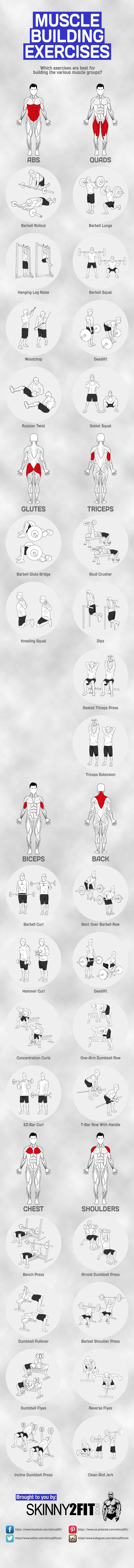 What are the top muscle building exercises for each muscle group? This graphic will show you the bes...