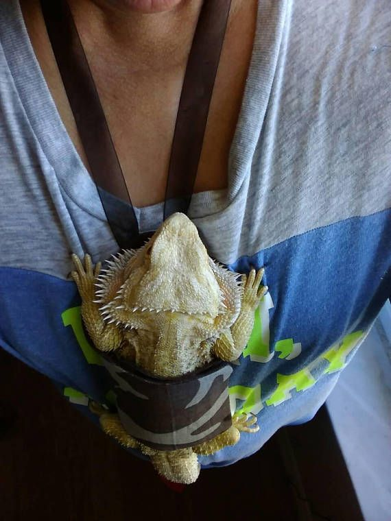 Adult Boys Bearded Dragon Carry-On Assorted Colors | pets ...