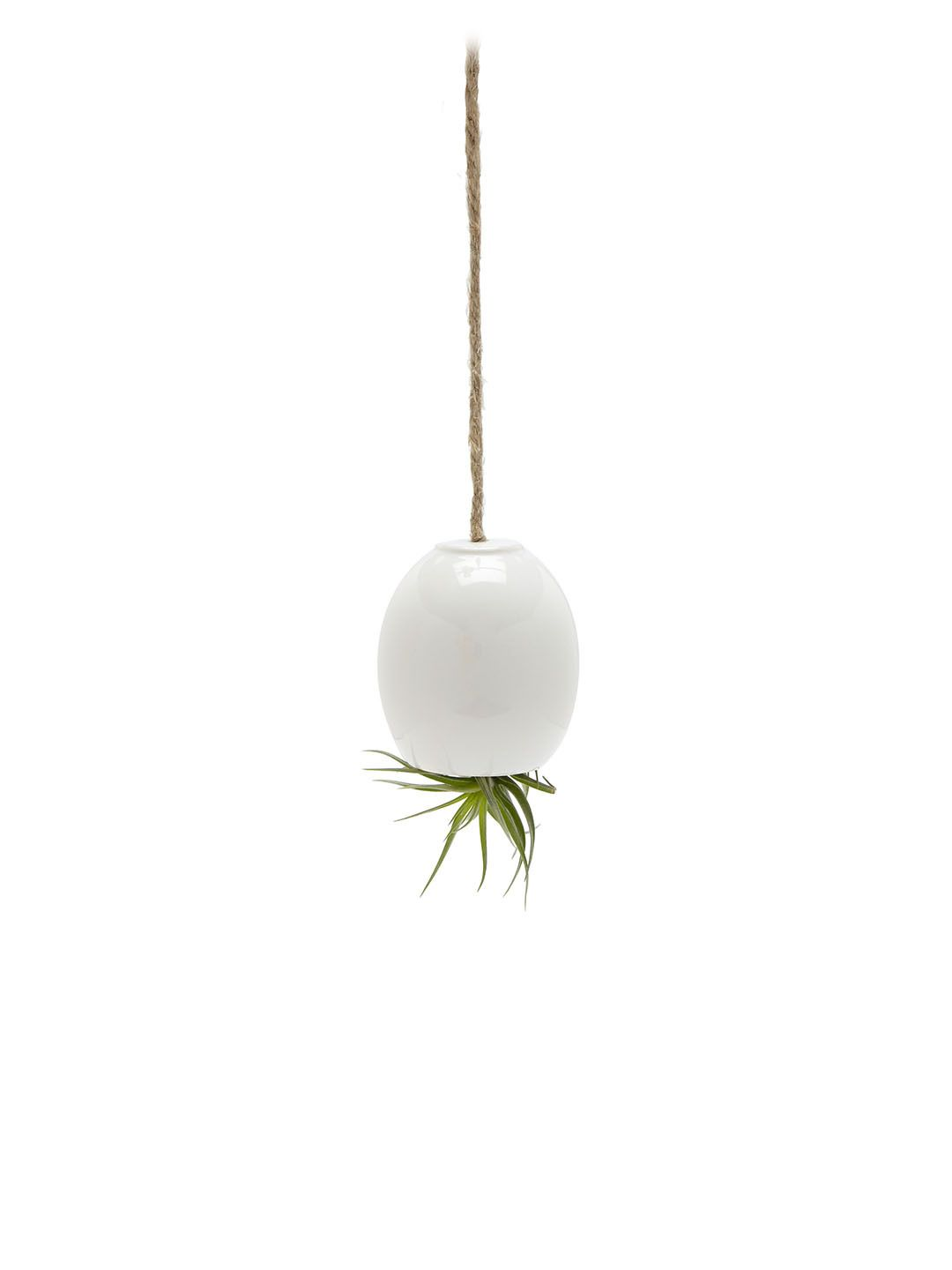Hanging Air Plant Pod by mudpuppy at Gilt