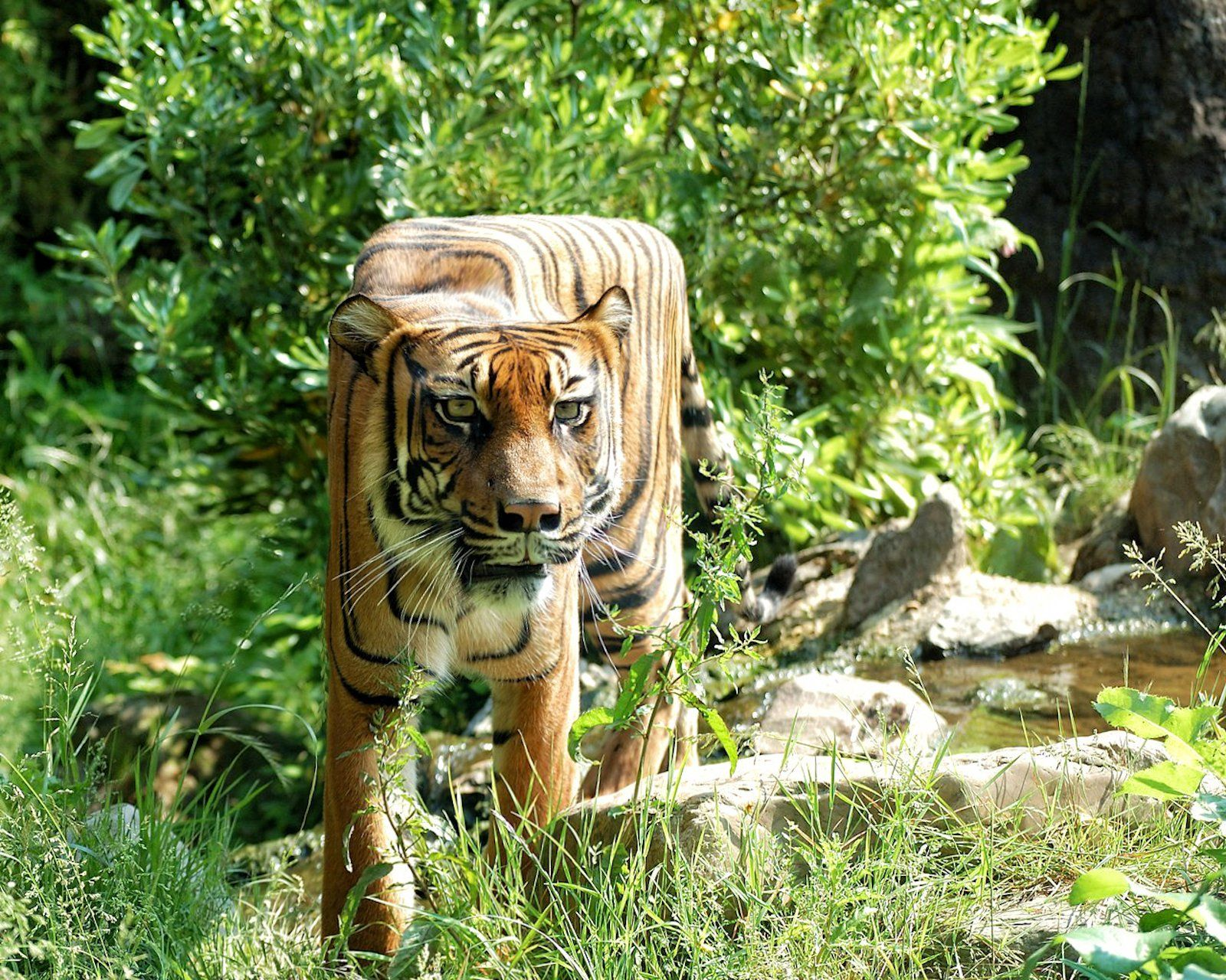 Minecraft in Real Life Retoucher Turns Real Animals Into