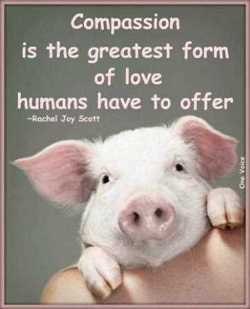 Cute Pig Quotes : quotes, Compassion, Greatest, Humans, Offer., Motivational, Quotes, Animal, Quotes,, Animals