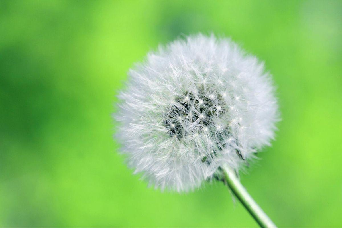 Be Something Wonderful In 2020 Close Up Photography White Dandelion Dandelion