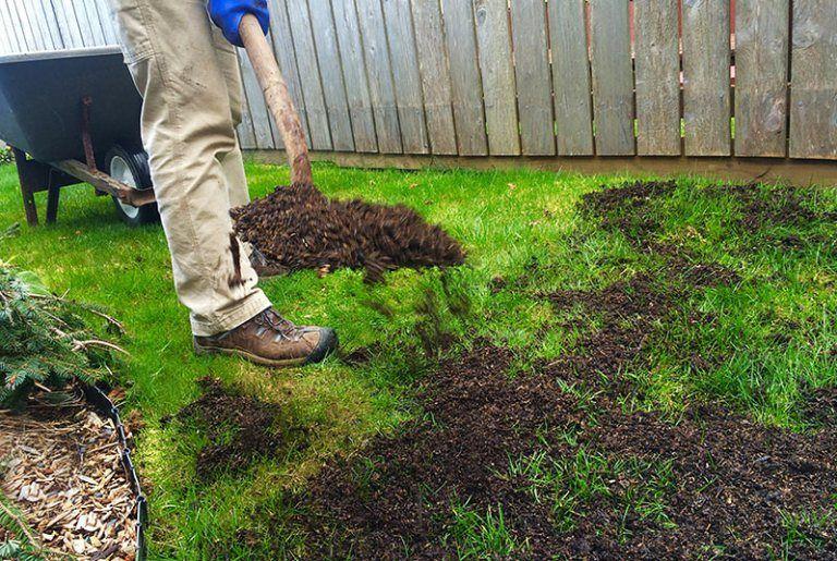 6 Ways To Revive A Dead Lawn Green Lawn Care Diy Lawn Lawn Repair