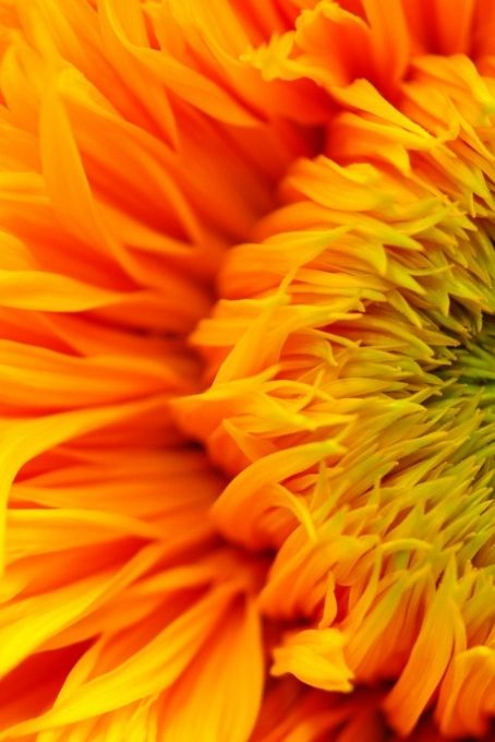 ^Sunflower