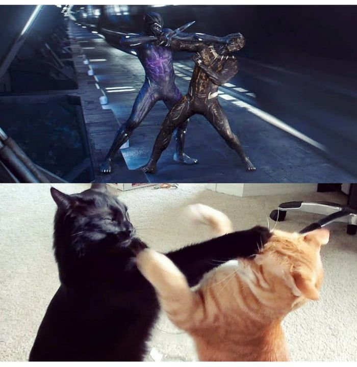 The real black panther fight