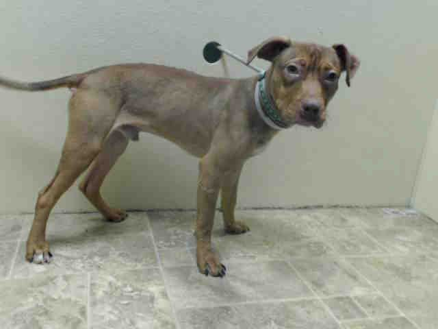 FUDGE Animal Shelter adopt a pet