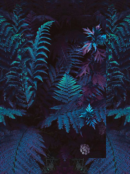 Parka London loves... tropical plants
