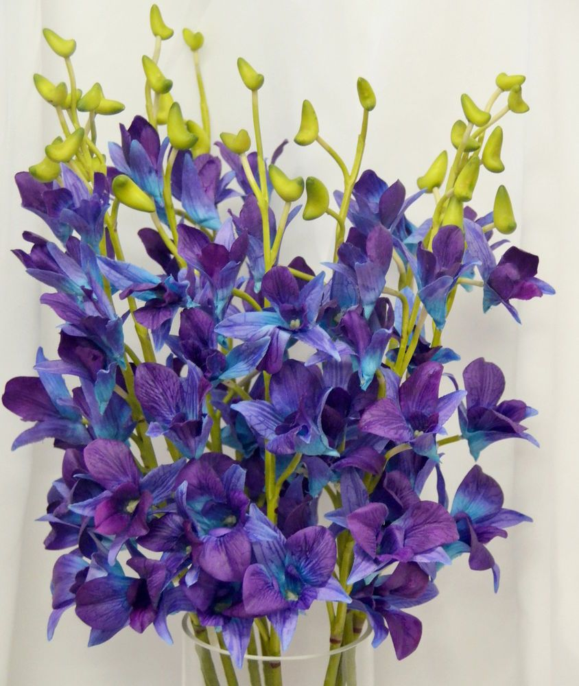 10x Latex Touch Singapore Galaxy Blue Purple Orchid Dendrobium