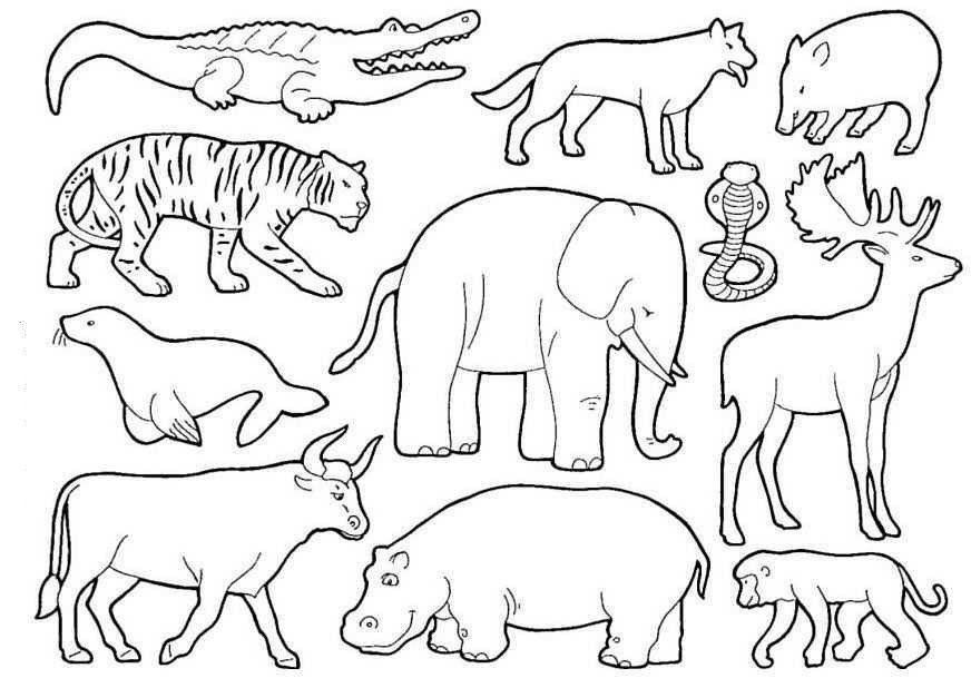 Desenhos De Animais Para Colorir Animais Para Colorir Animais