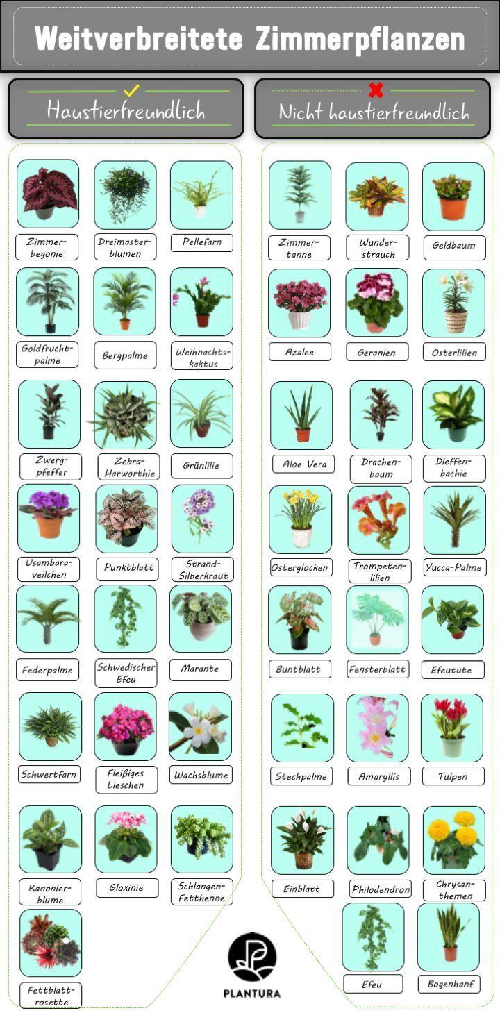 10 Giftige Zimmerpflanzen Fur Haustiere In 2020 Plants Indoor Plants Artificial Plants Indoor