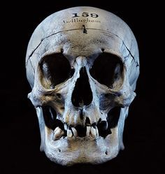 John Bellingham Assasin Of British Pm Spencer Perceval Skull Reference Real Skull Real Human Skull