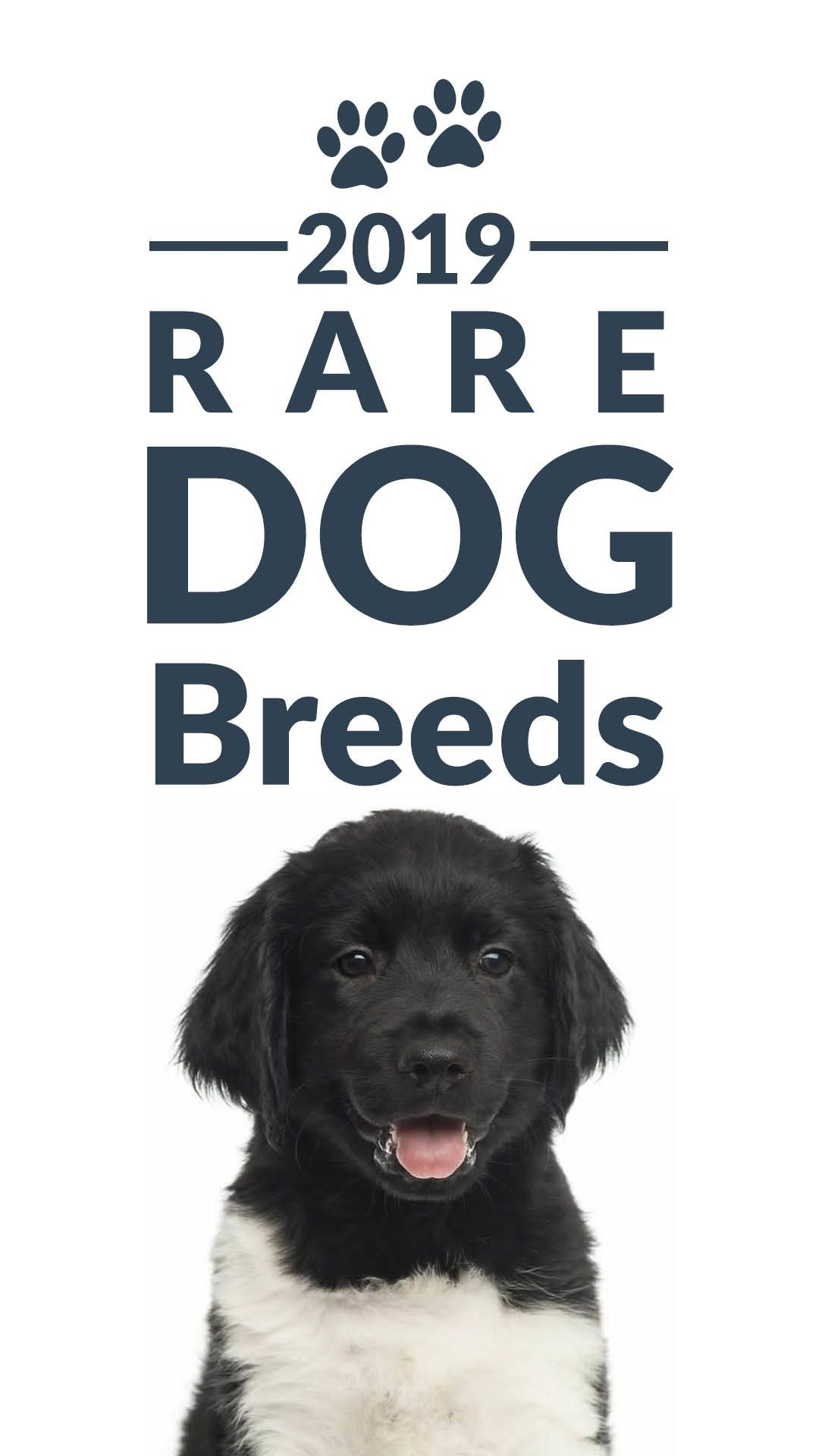 Have You Ever Heard Of These Rare Dog Breeds Rare Dog Breeds