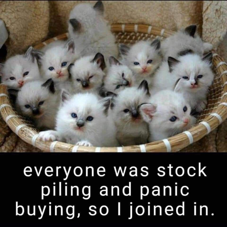 Pin By Crystal Mascioli On Cats In 2020 Animal Humour Cute Animals Animals