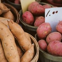Though you can purchase potatoes at your local supermarket, nothing is quite as rewarding as growing your own. If you don't have a lot of space, you can grow your own potatoes in containers in your back yard, on your patio or wherever you have a little extra room using materials that you already have at home or can get at a local hardware or... #patiodepapas