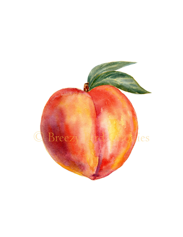 Peach Print Watercolour Peach Kitchen Print Watercolor Fruit