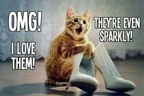 c509713739c51 Everyone needs a little sparkle. 9/21/18 | Kitty Love | Funny cats ...