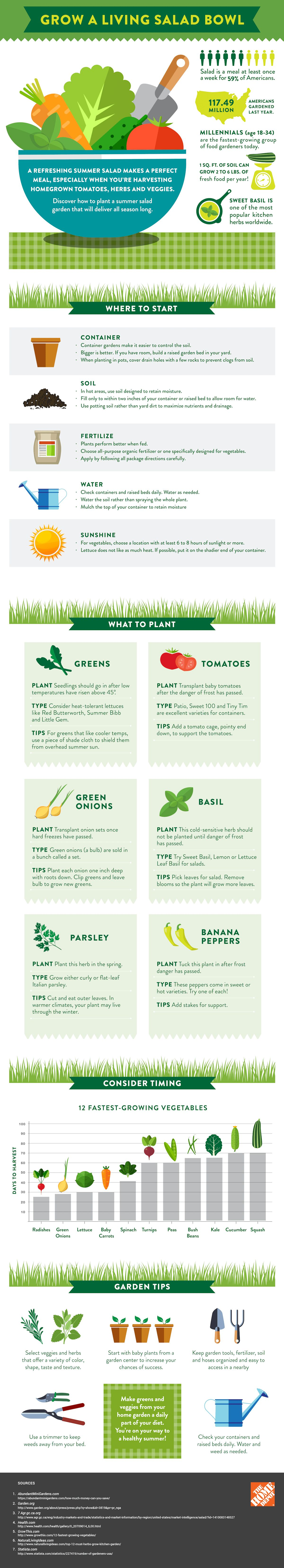 A Guide to Growing Your Own Living Salad Garden | Salad bowls ...