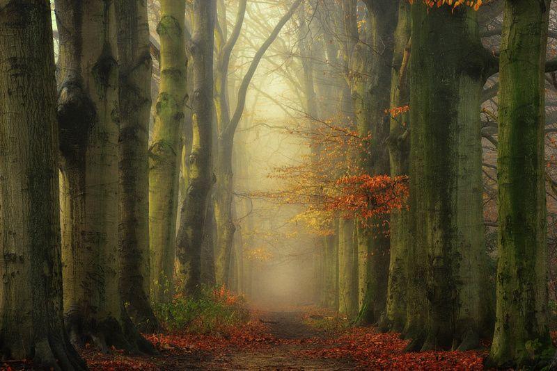 colors in the mist- Lars Van De Goor Photography Art