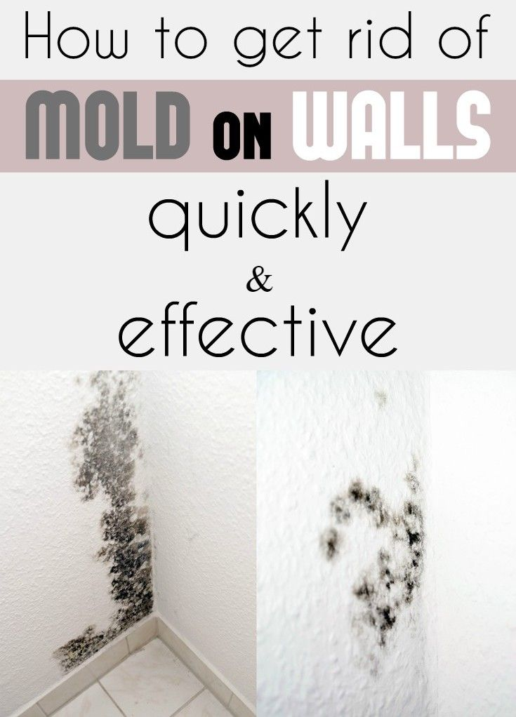 How To Get Rid Of Mold On Walls Quickly And Effectively Cleaning Ideas Com Wall Molding Get Rid Of Mold Mold In Bathroom