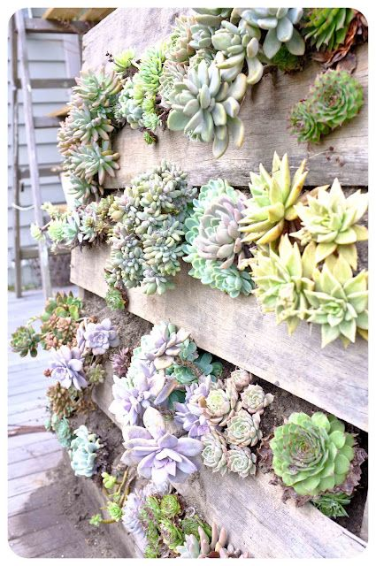 Recycled Pallet Vertical Succulent Wall Garden And Maybe Add Moss