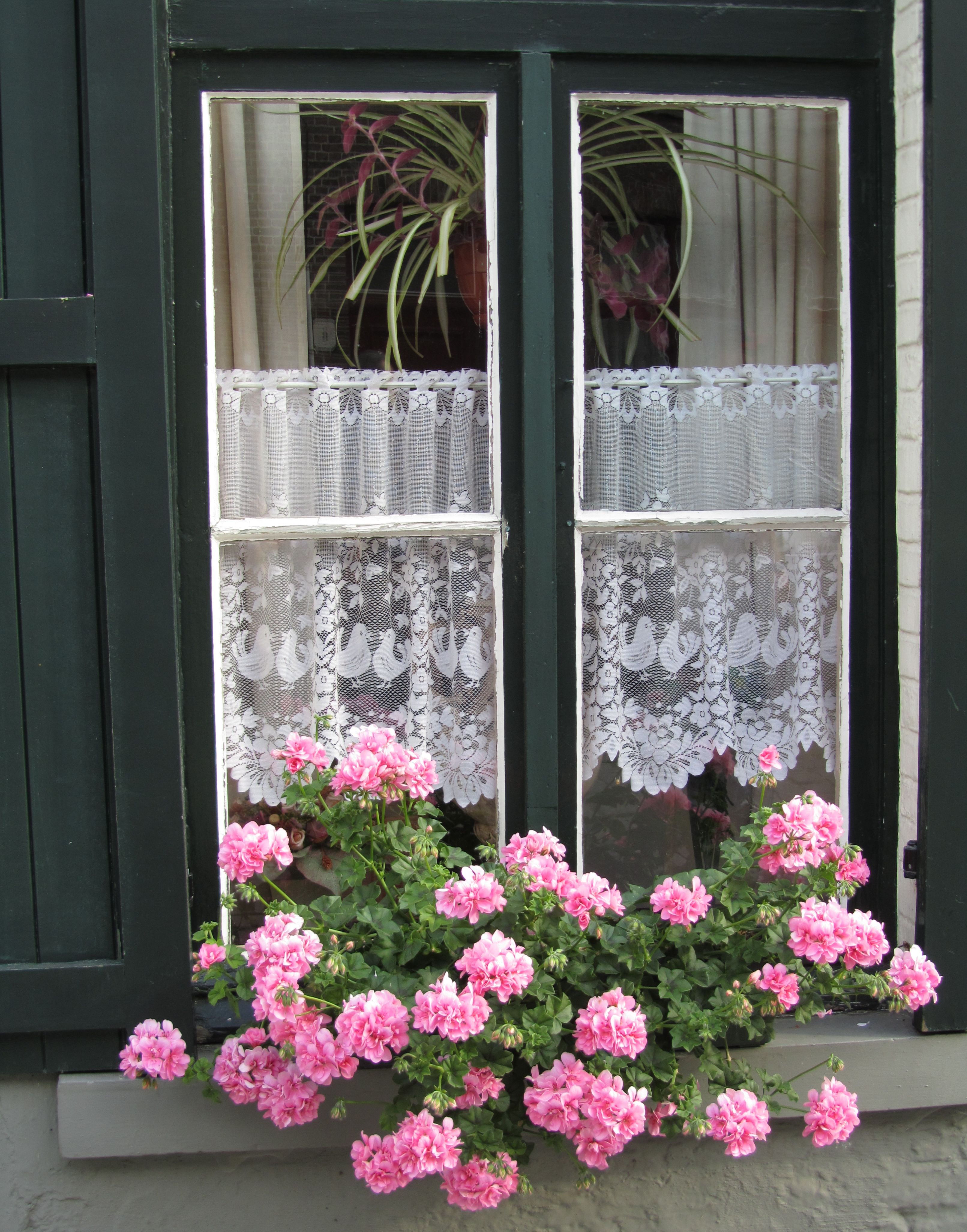 belgium window with lace - Google Search