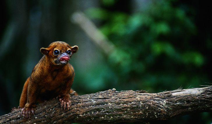 What Animals Live In The Amazon Rainforest Amazon Rainforest