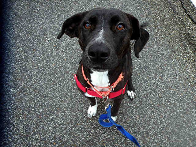 Pandora Is Waiting For You At Wphs Pittsburgh Pa Www Petharbor