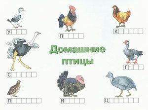 """Раскраска """"Домашние птицы"""" - Детский сайт ПЧЁЛКА ..."""