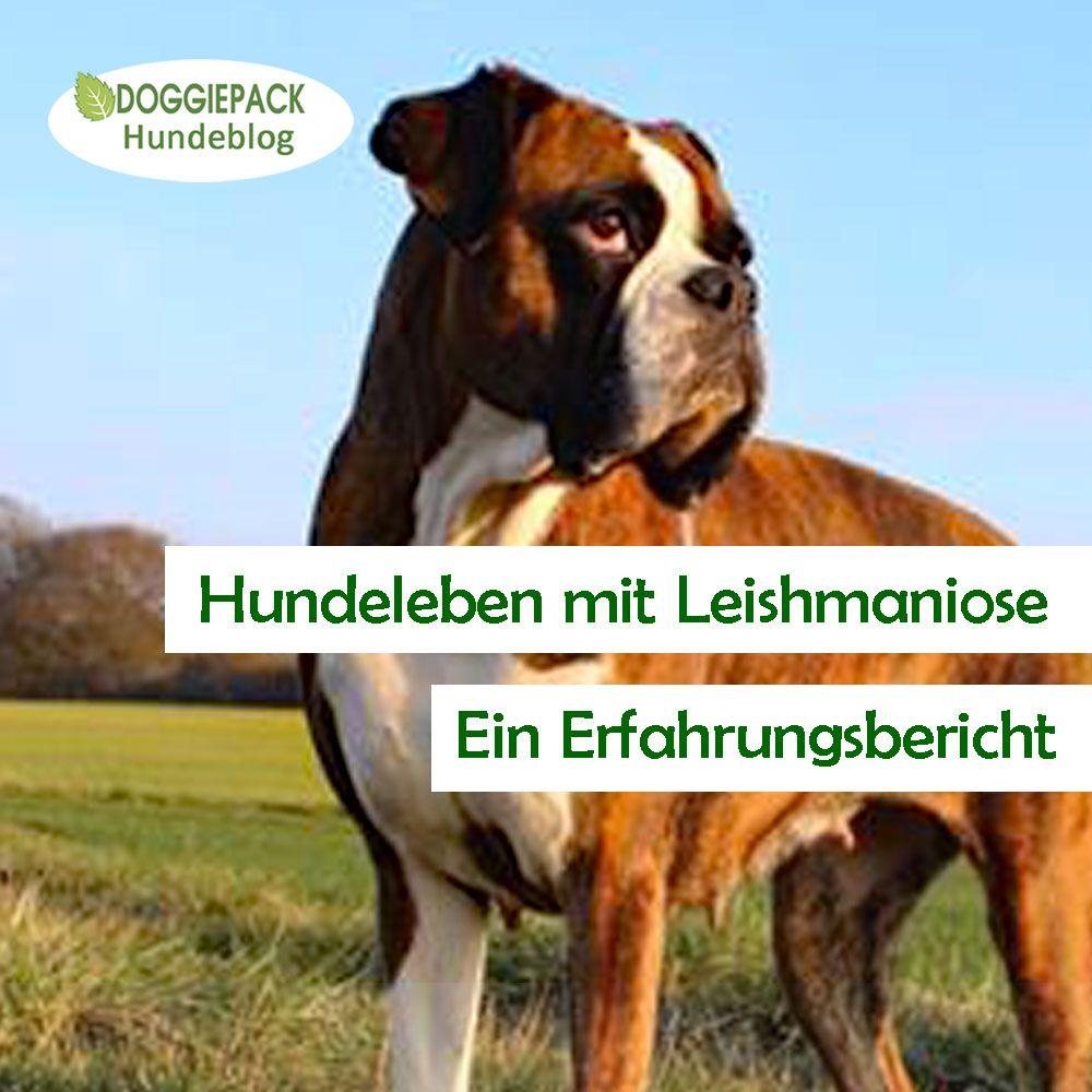 Pin Auf Fur Hunde In Hessen
