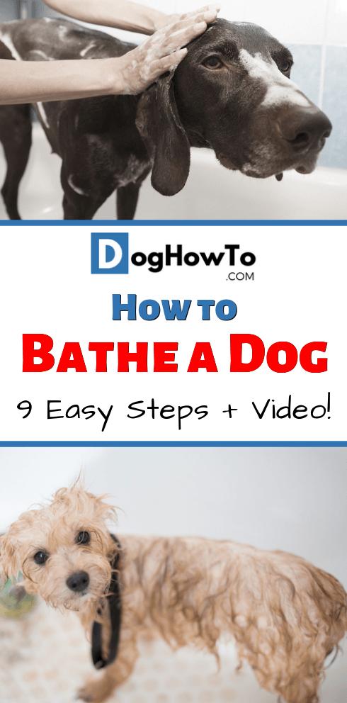 How To Bathe A Dog Stop Dog Barking Dogs Dog Barking