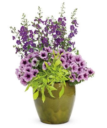 Proven Winners Container Gardening Using The Thriller