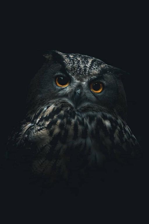 (99+)MeWe la red social de nueva generación in 2020 Owl