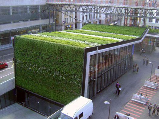 Muro vegetal de exterior canevaflor videos for Que planta para muro exterior vegetal